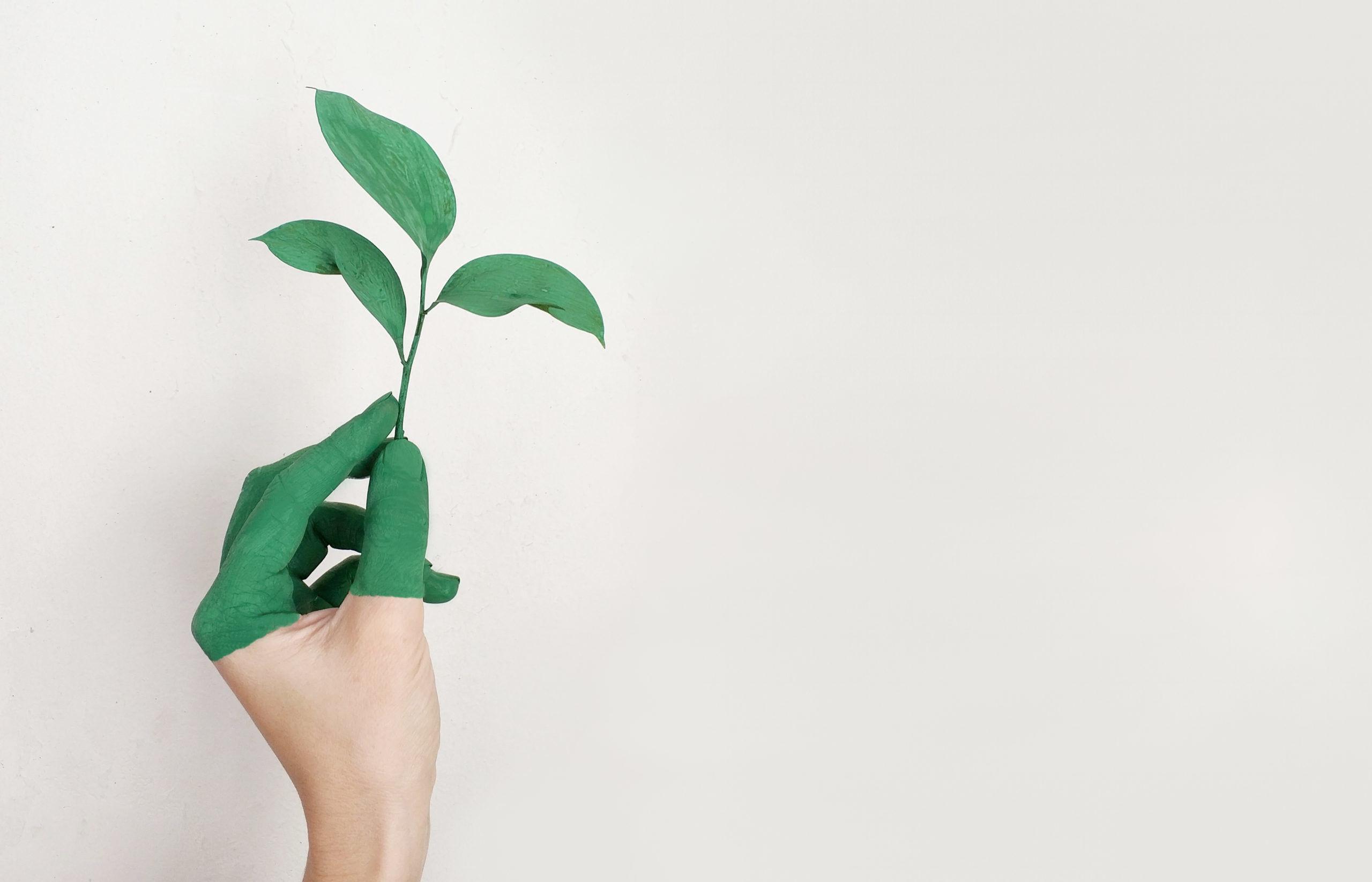4sustainability greenwashing scaled